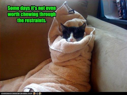 crazy cute kitten towel - 2497047808
