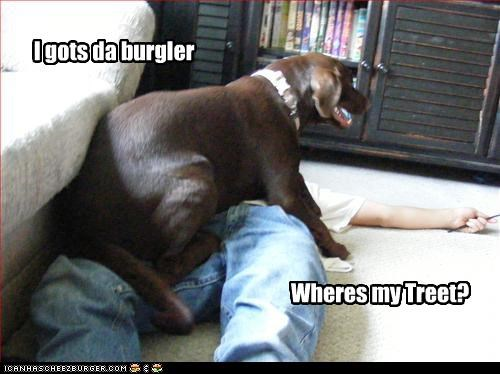 babysitting burglar human labrador security sitting treet - 2497259264