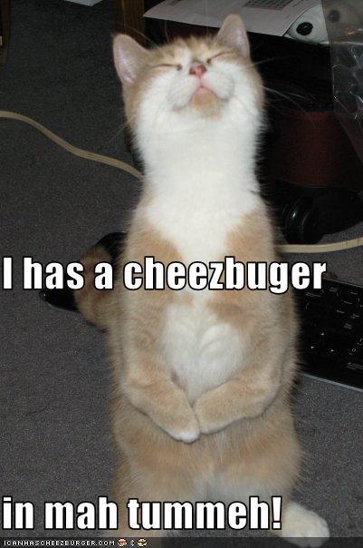 Cheezburger Image 2498905856