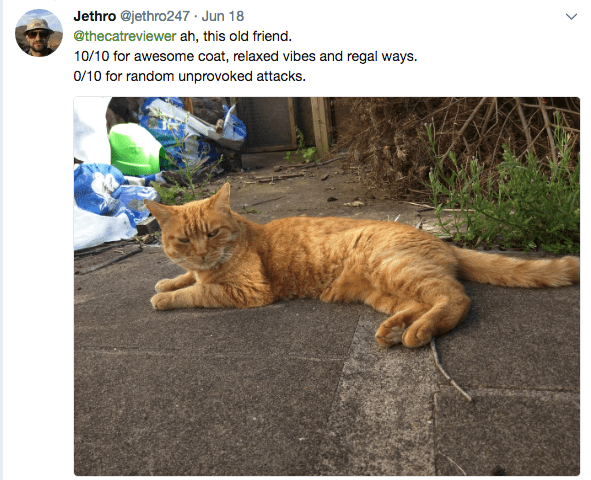 an orange cat looking at the camera - cover photo for cat reviews people are giving.