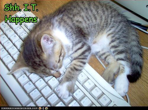 Cheezburger Image 2500556032