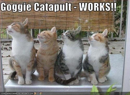catapult,dogs,plotting