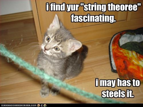 cute,kitten,stealing,String Theory