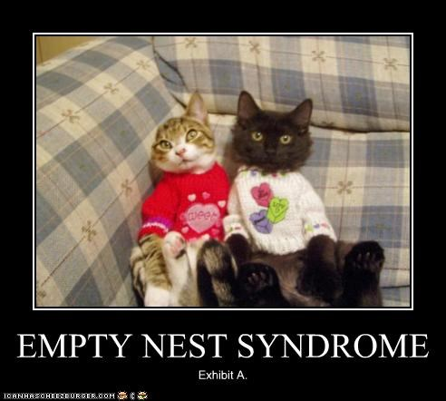 Image result for empty nest funny pics