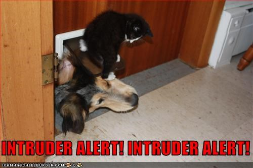 alert attack doggie door intruder lolcats whatbreed