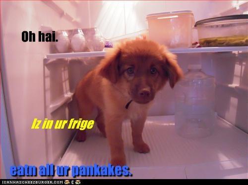 Cheezburger Image 2502738688