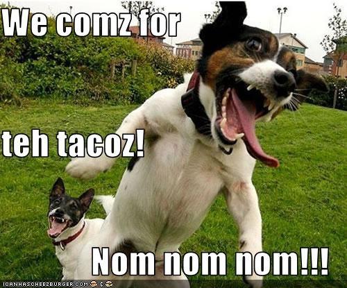 Cheezburger Image 2503727360