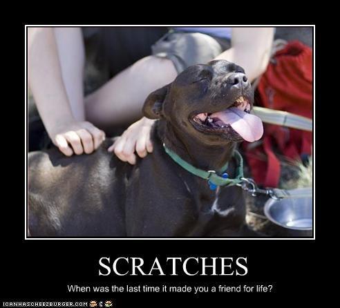 friends life mans-best-friend pitbull scratch - 2504069376