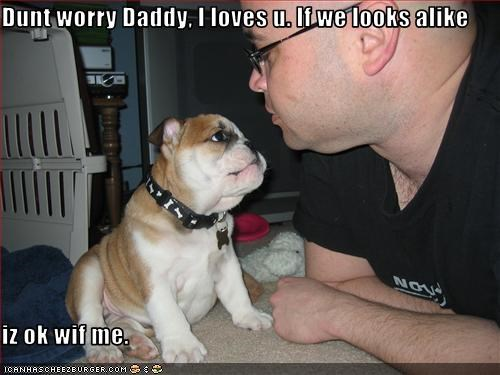 bulldog,daddy,lookalike,puppy