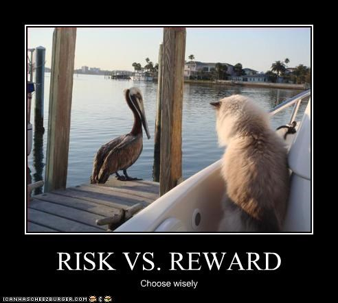 danger,lolbirds,rewards,scary
