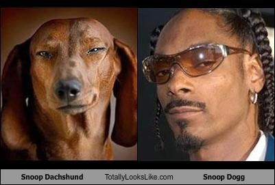 dachshund dogs Music rapper snoop dogg - 2506589440