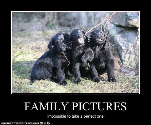 family impossible perfect photos posing puppies whatbreed