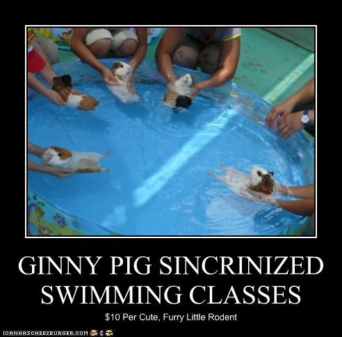 GINNY PIG SINCRINIZED SWIMMING CLASSES