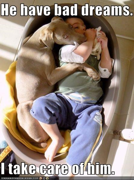 bad,care,child,cuddles,dreams,hugs,human,protection,weimaraner