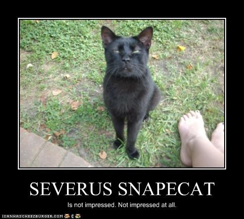 SEVERUS SNAPECAT Is not impressed. Not impressed at all.