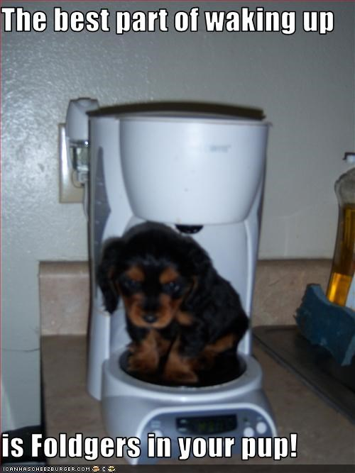 cocker spaniel coffee commericals morning puppy wake up - 2510989568