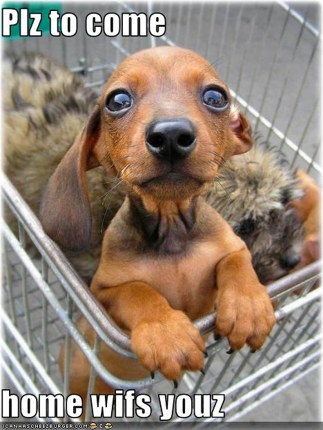 adoption,dachshund,home,please,puppy,shopping cart