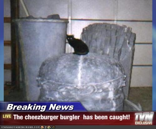 Cheezburger Image 2514154240