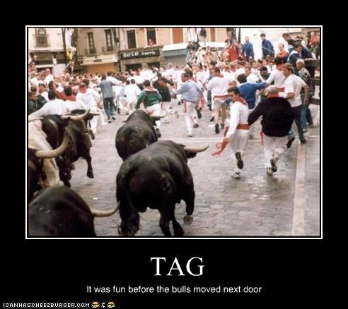 TAG It was fun before the bulls moved next door