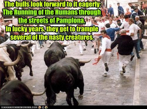 The bulls look forward to it eagerly: The Running of the Humans through the streets of Pamplona. In lucky years, they get to trample several of the nasty creatures. The Running of the Humans through the streets of Pamplona.