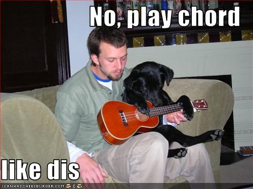 guitar,help,labrador,Music,play