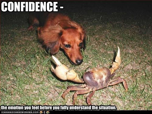CONFIDENCE - the emotion you feel before you fully understand the situation.