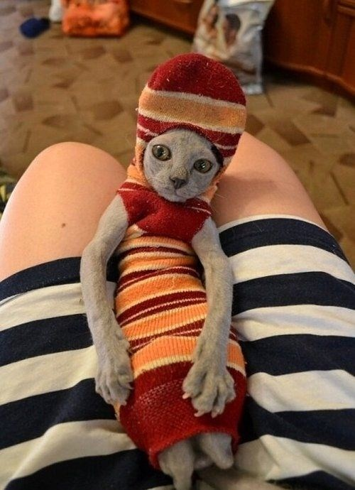 A cat dressed in a sock - cover photo for a list of animals that aren't having such a good day.