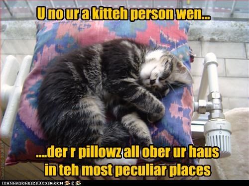 cute,heater,kitten,nap,Pillow