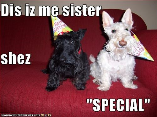 crazy,face,hat,Party,scottish terrier,sister,special