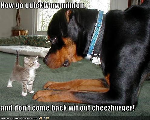 Cheezburger Image 2517700096