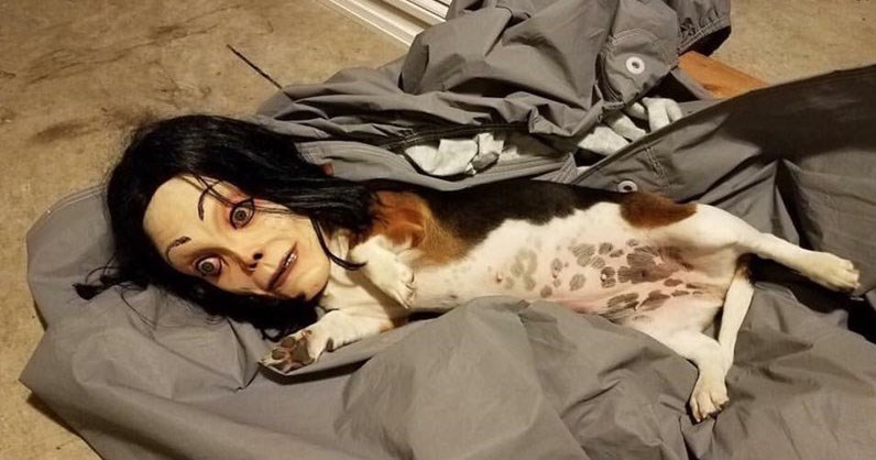 Collection of weird and WTF photos that are strange, unsettling or cursed.