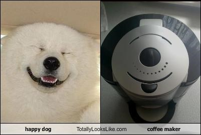 appliance,coffee maker,dogs,happy