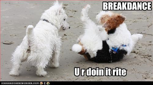breakdance dancing doin it rite west highland white terrier wire fox terrier - 2521558272