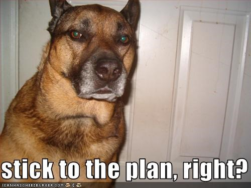stick to the plan, right? - Cheezburger - Funny Memes | Funny Pictures