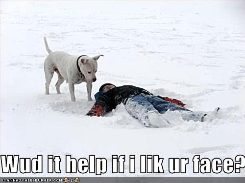 cold face help human lick pitbull snow - 2525387008