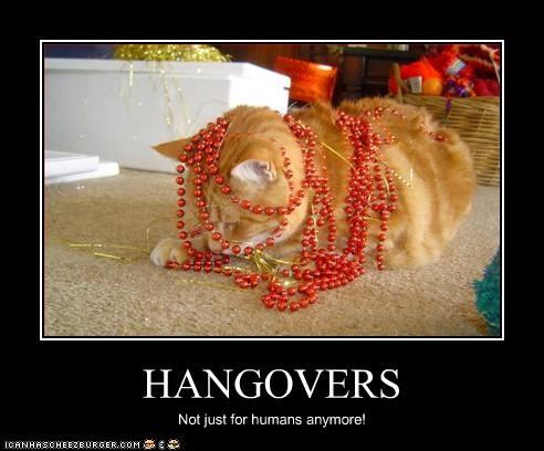 HANGOVERS Not just for humans anymore!