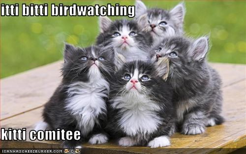 birds,cute,ibkc,kitten