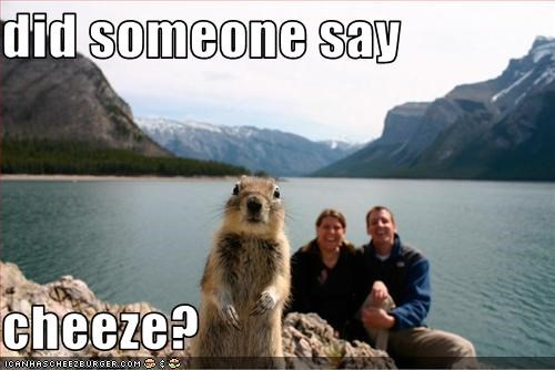 cheez,lolsquirrels,Photo