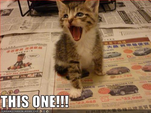 car cute kitten want - 2527287040