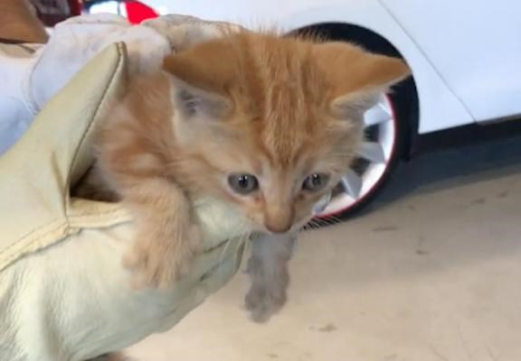 Tesla service center rescued a kitten trapped in a bumper