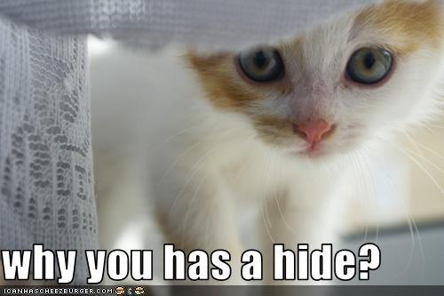 cute hiding kitten - 2528932608