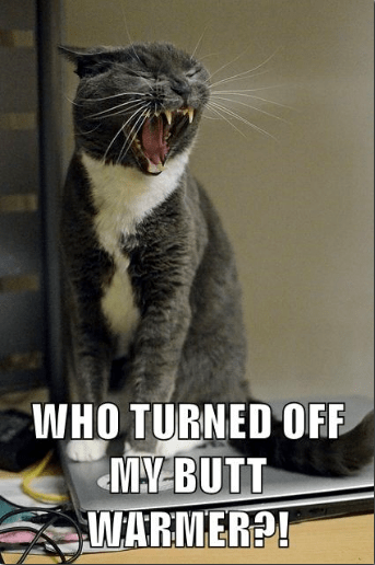 A funny meme of a cat yelling why his butt warmer isn't working - a cover photo for a list of the best memes of cats that other people gave i can has cheezeburger