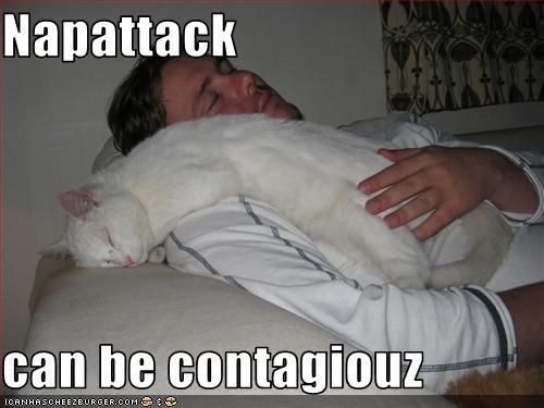 contagious nap - 2529359872
