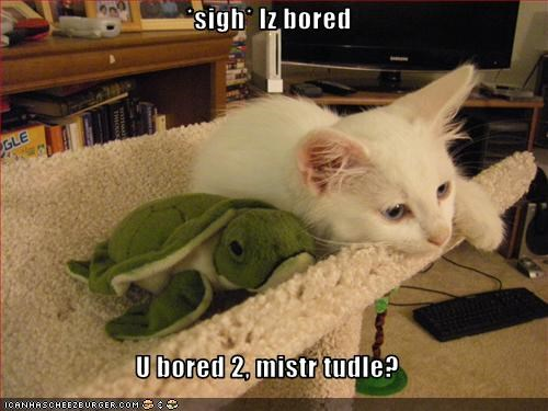 bored,cute,friend,scratching posts,stuffed animals,turtle
