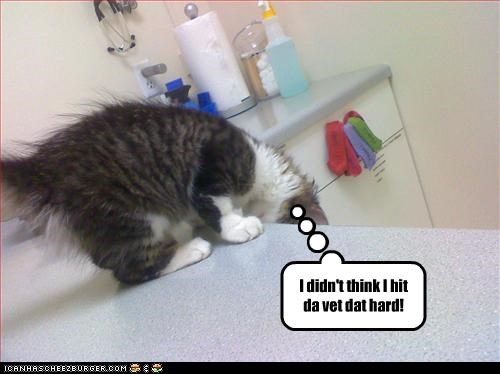 cute do not want kitten pow vet - 2529880064