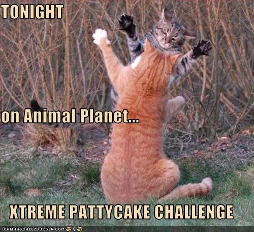 challenge pattycake TV - 2529996544