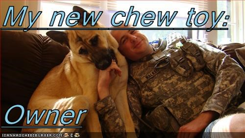 Cheezburger Image 2530189824