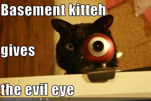 basement cat,evil,eye