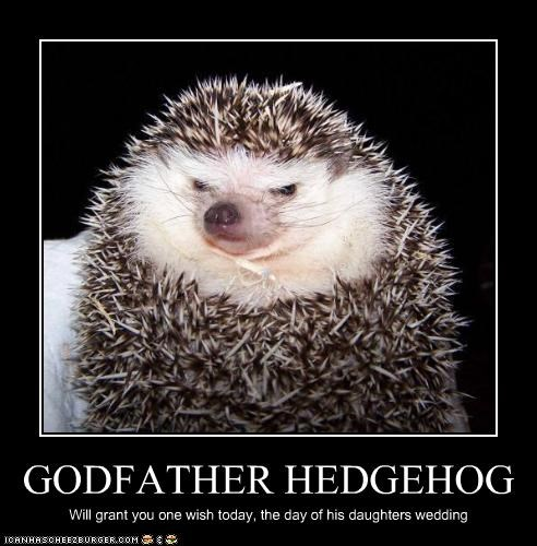 GODFATHER HEDGEHOG Will grant you one wish today, the day of his daughters wedding