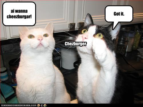Cheezburger Image 2530615296